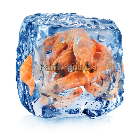shrimps in ice cube