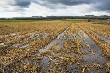 floods in the corn field after