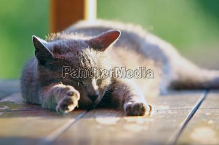close up of a cat sleeping