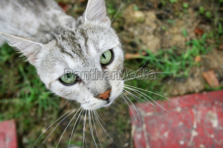 close up of grey cat looking