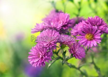 purple flowers in sunlight