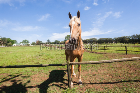 horse portrait animal