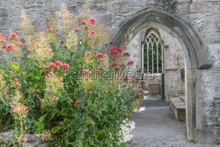 ruins of muckross abbey