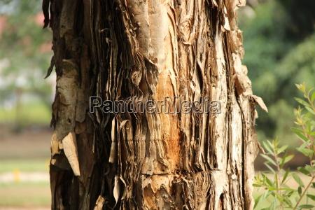 africa dr congo kinshasa tree tree