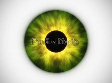 green eye iris pupil yellow black