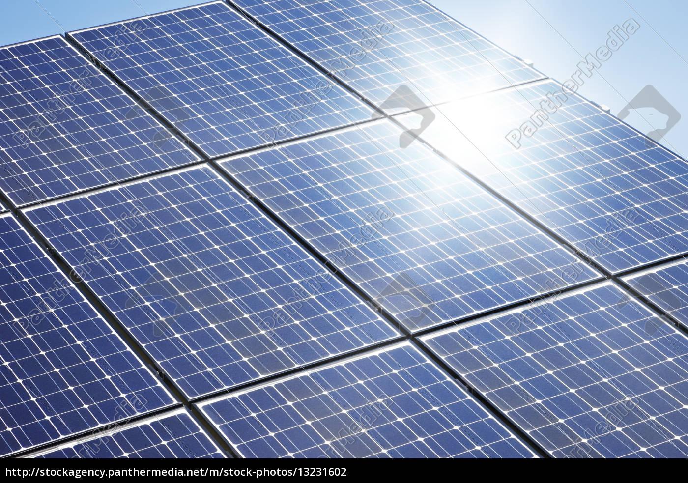 solar, plant - 13231602