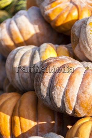muscade de provence pumpkin cucurbita pumpkin