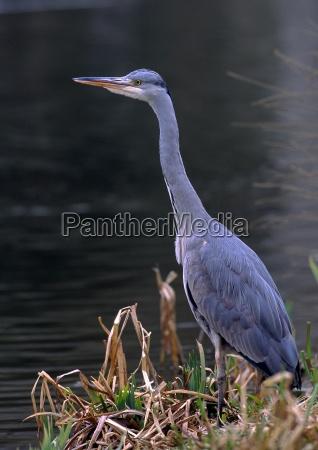 food aliment animal bird fauna birds