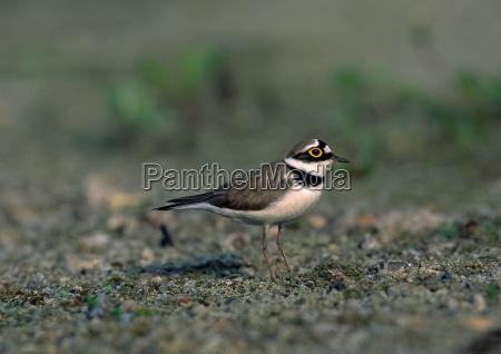 protected sheltered animal bird fauna birds