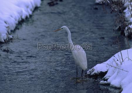 waters winter animal bird fauna birds
