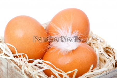 brown eggs at hay in the