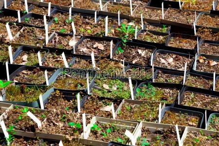 seedlings of various plants in the
