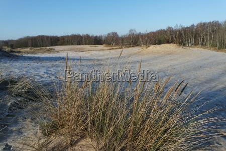 hamburg boberg dunes in winter