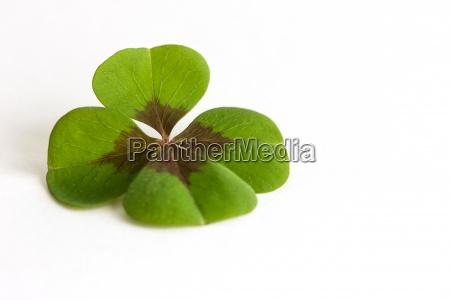 leaf wedding marriage marriage ceremony wedding
