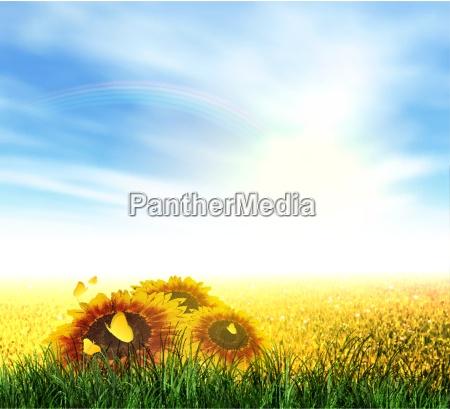 summer field sky sun rainbow grass