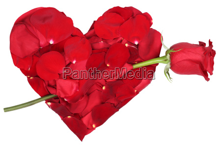 heart of flowers with rose theme