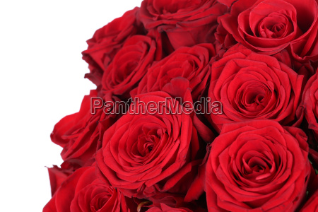 bouquet of red roses for valentines