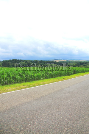 forest corn and road