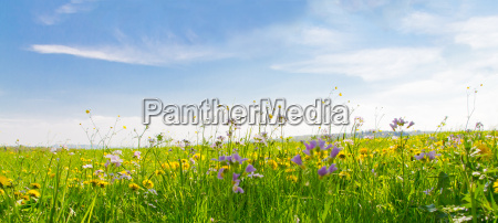 spring meadow with blue sky