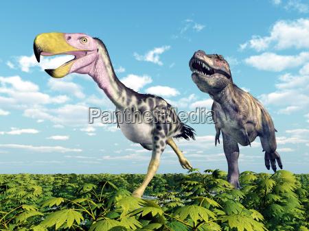 tyrannosaurus rex attacks the terror bird