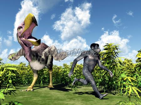 homo habilis the evolution of