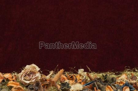 red velvet background with rose