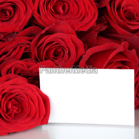 red roses for valentines day or