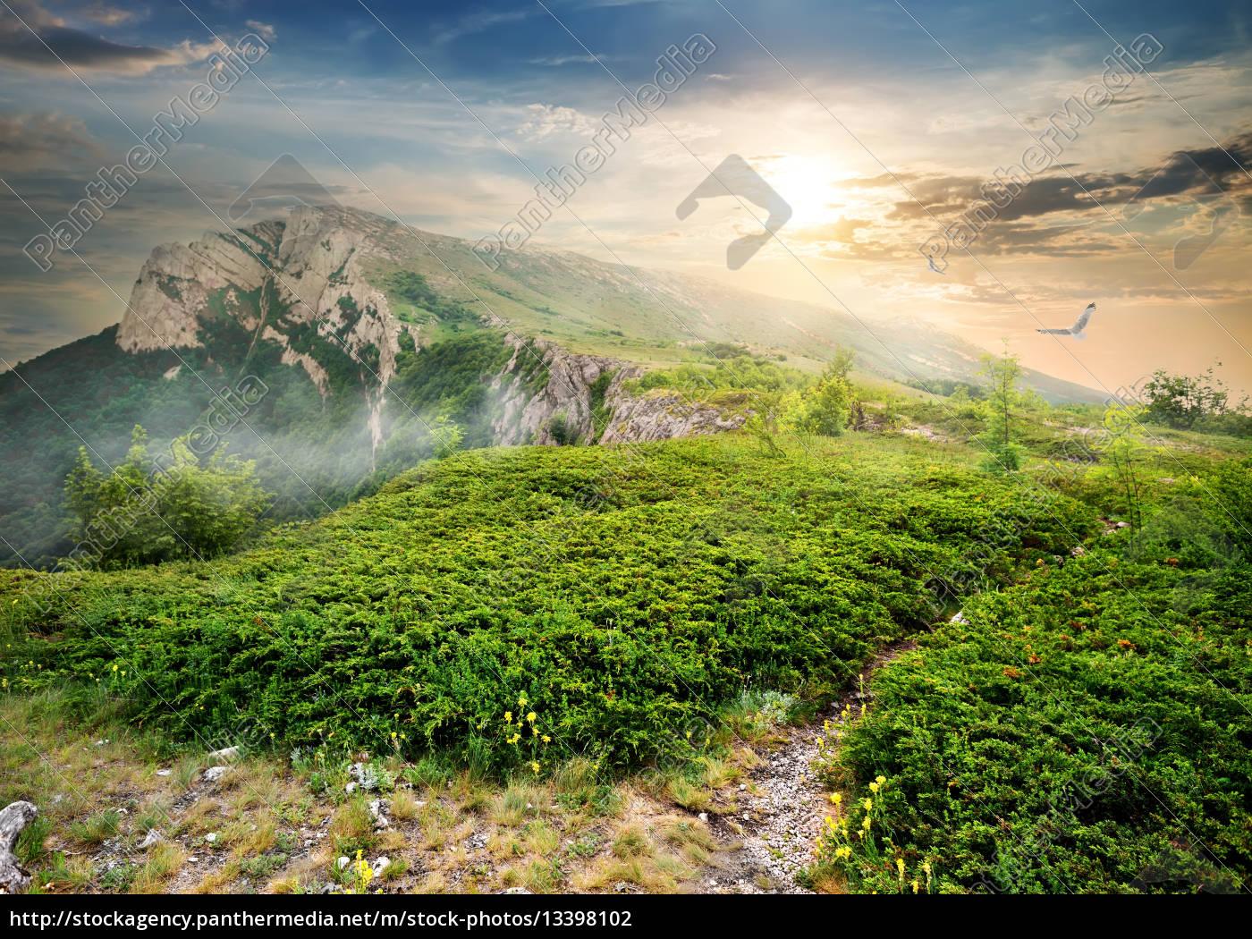 juniper, in, mountains - 13398102