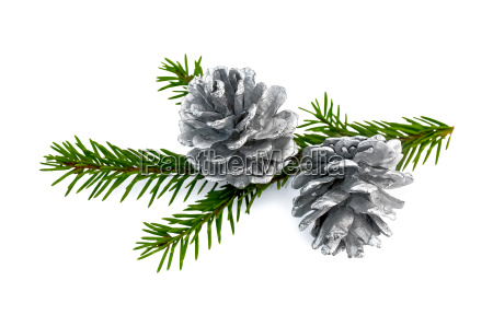 christmas fir cones on a branch