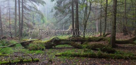 summer landscape of old forest and