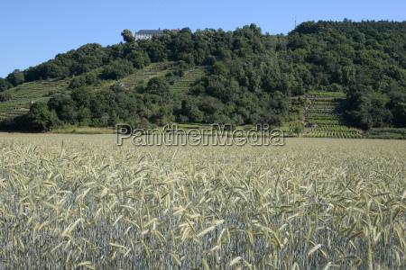field with engelberg abbey
