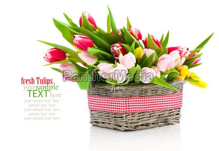 tulips - 13427420