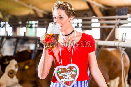 farmer drinks beer in cowshed