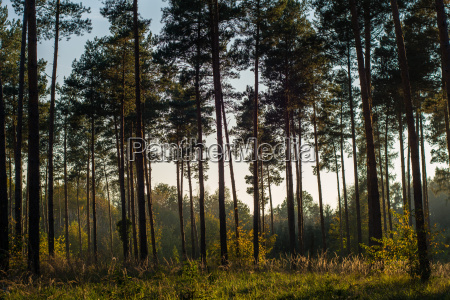 forest in evening light