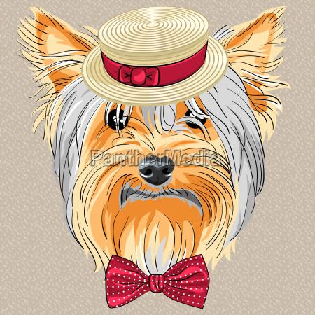vector funny cartoon hipster dog yorkshire