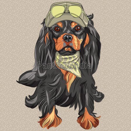 vector, cute, hipster, dog, cavalier, king - 13450938
