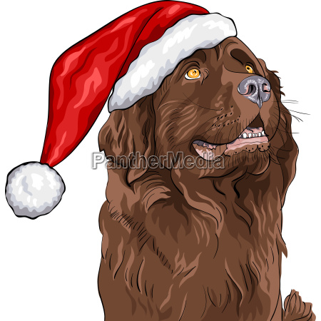 vector dog newfoundland in a christmas
