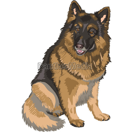 vector color sketch dog german shepherd