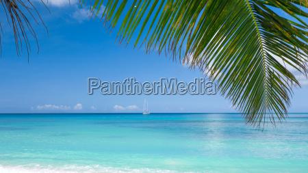 tropical, beach - 13460116