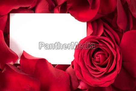 red rose petals with card