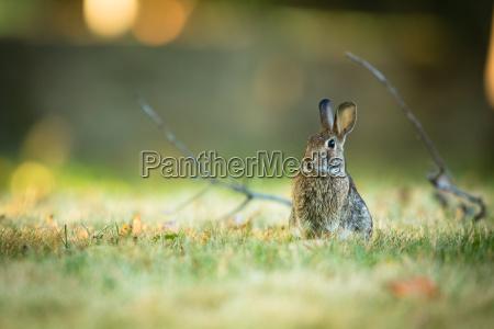 cute, rabbit, in, grass - 13484656