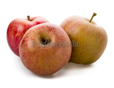 apple varieties boskoop