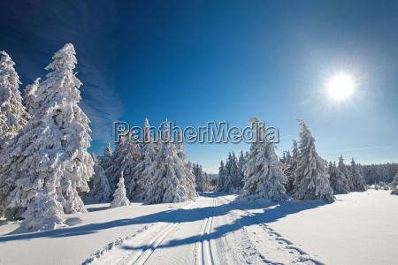 winter, forest - 13516370