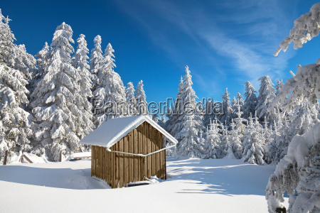 winter, forest - 13516374