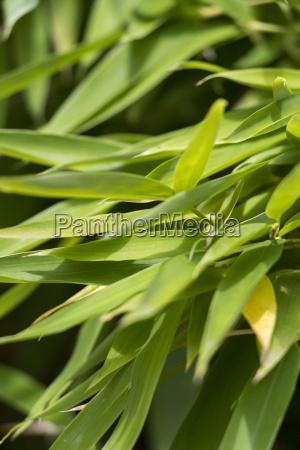 close up of bamboo ornamental bamboo