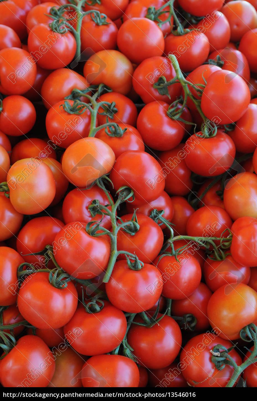 tomato - 13546016