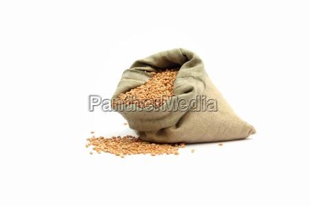 wheat in sack on white