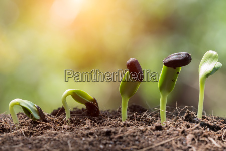 seed root on soil with sunbeam