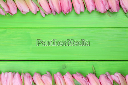 frame from tulips flowers for spring