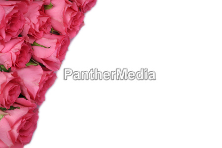 roses gift for valentines day or
